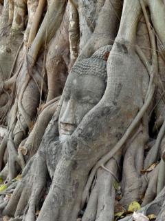 ayutthaya-steinkopf4