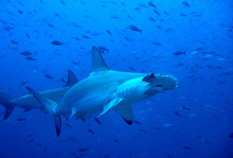 Galapagos, Ecuador – Jan 2011